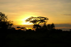 Safari sunset Stock Images