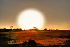 Safari Sunset Royaltyfri Fotografi