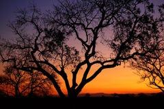 Safari Sunset Immagine Stock