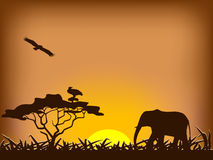 Safari sunset Royalty Free Stock Image
