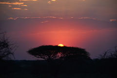 Safari Tanzania de la puesta del sol Fotos de archivo