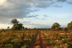 Safari - Tarangire National Park. Tanzania, Africa Stock Image