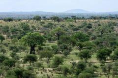 Safari - Tarangire park narodowy. Tanzania, Afryka Zdjęcie Royalty Free