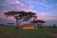 Safari tented camp in savannah Stock Photos
