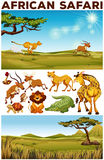Safari theme with wild animals in the field. Illustration Royalty Free Stock Photography