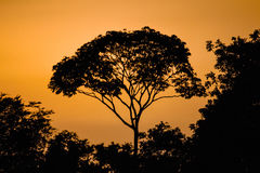 Safari Time. Backlight my pretty sunset tree Royalty Free Stock Images