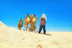 Safari tourism on camels. Sahara desert, Tunisia, North Africa stock photography
