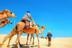 Safari tourism on camels. Sahara desert, Tunisia, North Africa. Tourists riding on camels. Safari tourism. Sahara desert, North Africa royalty free stock image