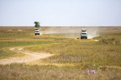 Safari tourists on game drive in Serengeti Stock Images