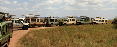 Safari Traffic Viewing Spot. Safari trucks all stopped in one spot to view wildlife royalty free stock photos