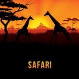 Safari. Vector illustration of Africa landscape with wildlife and sunset background. Safari theme Stock Photo