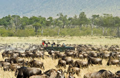 Safari vehicle Stock Image