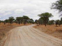Safari w Afryka Tarangiri-Ngorongoro Zdjęcie Royalty Free