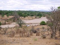 Safari w Afryka Tarangiri-Ngorongoro Obrazy Stock