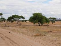 Safari w Afryka Tarangiri-Ngorongoro Obraz Stock