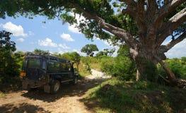 Safari w Afryka Wschodnia Fotografia Royalty Free