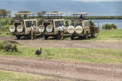 Safari w Nogorongoro kraterze Fotografia Stock