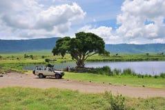 Safari w Tanzania, Afryka Fotografia Royalty Free