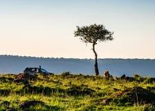 Safari widok z ciężarówką i lwem w Kenja fotografia stock