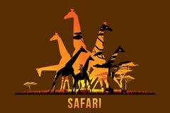 Safari and wildlife. Vector illustration of Africa landscape with wildlife and sunset background. Safari theme Stock Image