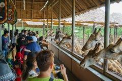 Safari World Bangkok Thaland - 7 Juli 2018: De jonge geitjes en de volwassenen zijn stock afbeeldingen