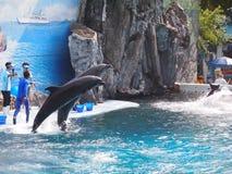 Safari World Zoo. Zoo in Bangkok, Thailand Royalty Free Stock Images