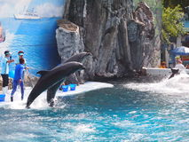 Safari World Zoo Royalty Free Stock Images