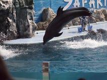 Safari World Zoo. Zoo in Bangkok, Thailand Stock Photos