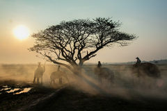 Safari wschód słońca Zdjęcie Royalty Free