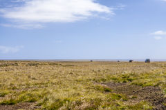 safari 4X4 i Falklanden Islands-5 Arkivbilder