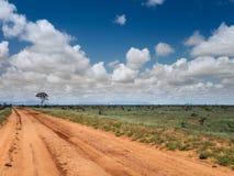 Safari ziemi ślad w dzikiego Obraz Stock