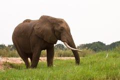 Safari Zimbabwe lizenzfreies stockfoto