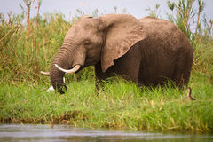Safari Zimbabwe Stock Photos