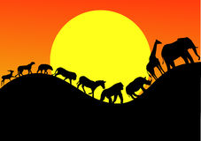 safari zwierzęcy slhouette Obraz Royalty Free