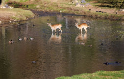 Safari zwierzęta Zdjęcie Stock
