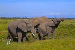 Safariamboseli Stock Foto's