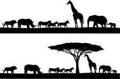 Safaridjursilhouette Arkivfoton