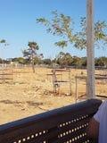 Safarien parkerar Royaltyfri Bild