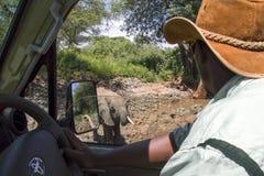 Safarihandbok som ser den närliggande elefanten royaltyfria bilder
