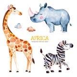 Safariinzameling met giraf, rinoceros, zebra, stenen vector illustratie