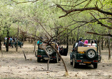 Safarijeeps in Ranthambore-park Royalty-vrije Stock Foto's