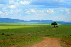 Safarilager Stockfoto