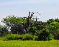 Safaris de Kilimanjaro en el reino animal Fotos de archivo libres de regalías