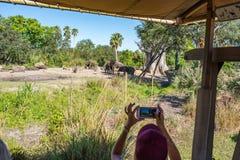 Safaris de Kilimanjaro en el reino animal en Walt Disney World Imagen de archivo libre de regalías