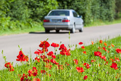 Safe and enjoyable journey. Poppies growing right near the asphalt road, a car driving on the road. Safe and enjoyable journey Stock Images