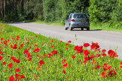 Safe and enjoyable journey. Poppies growing right near the asphalt road, a car driving on the road. Safe and enjoyable journey Royalty Free Stock Photography