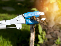 Safe kids from snake Catching snake in garden home with catcher Stock Photos