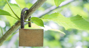 Safe the nature. Lock hanging on branch of a plant Royalty Free Stock Image
