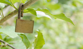 Safe the nature. Lock hanging on branch of a plant Stock Photo