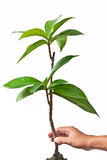 Safe the plant. Saving the plant for environment Royalty Free Stock Photography
